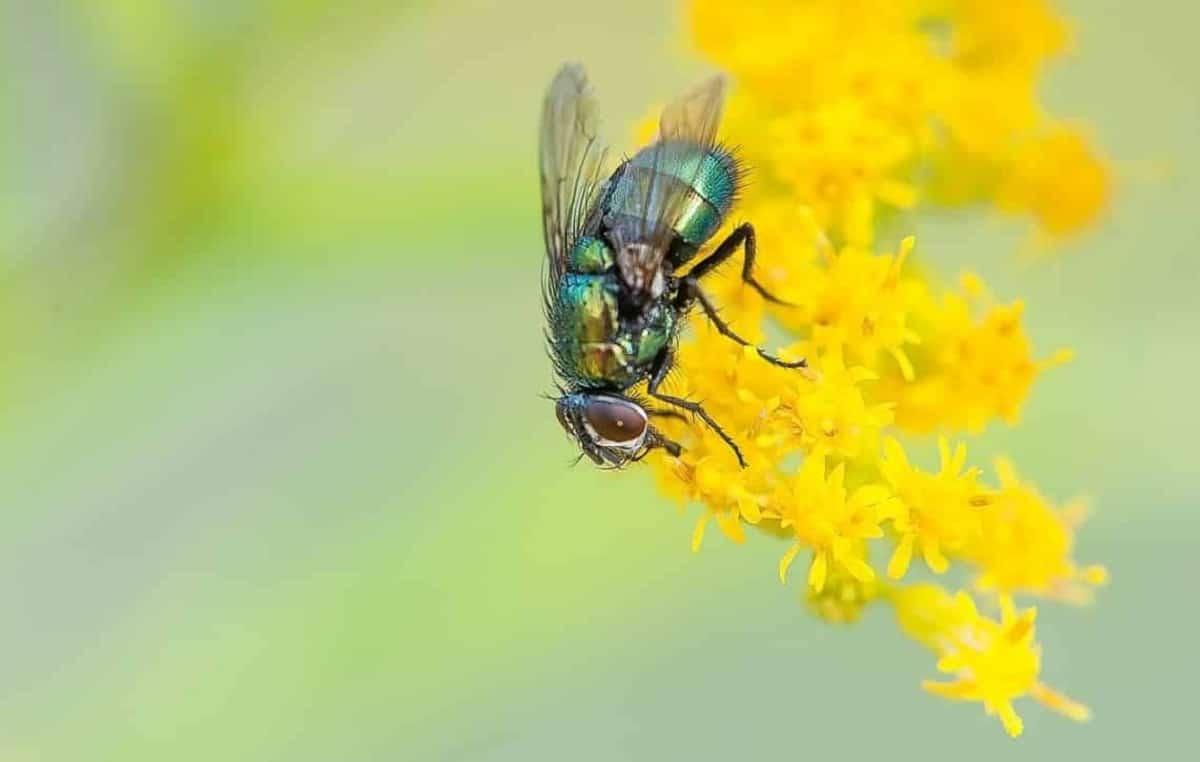 importancia y funcion de la mosca en los ecosistemas
