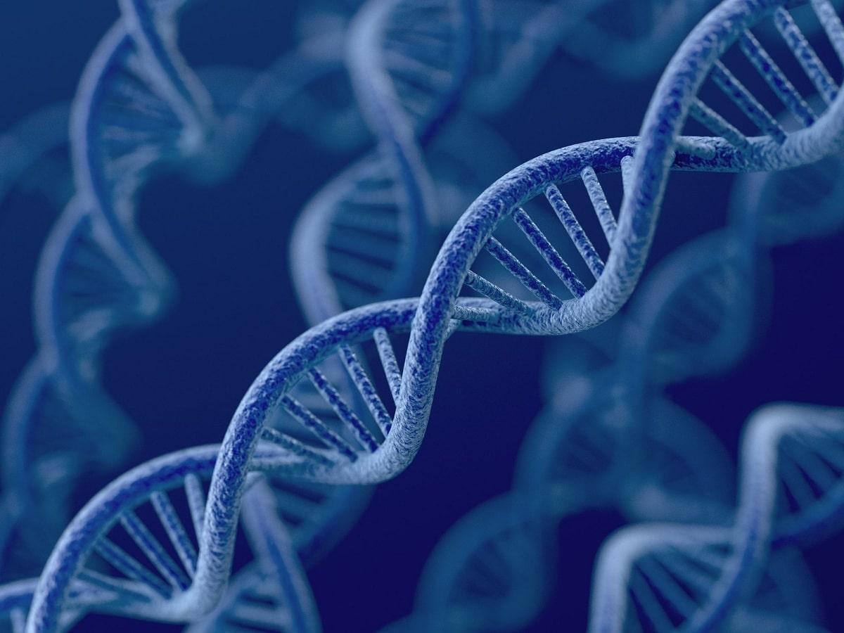 bases nitrogenadas en adn