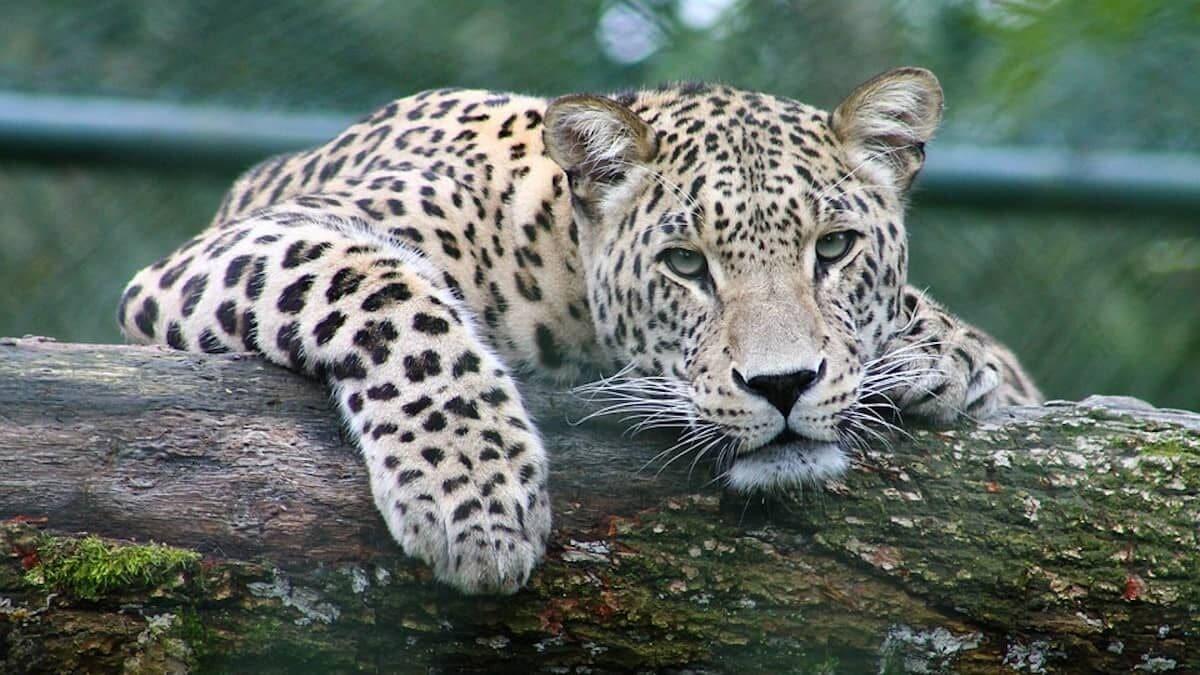 biodiversidad de animales