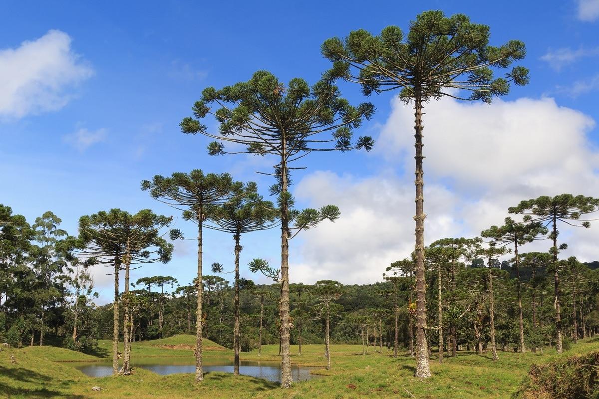 plantas resistentes y evolucionadas