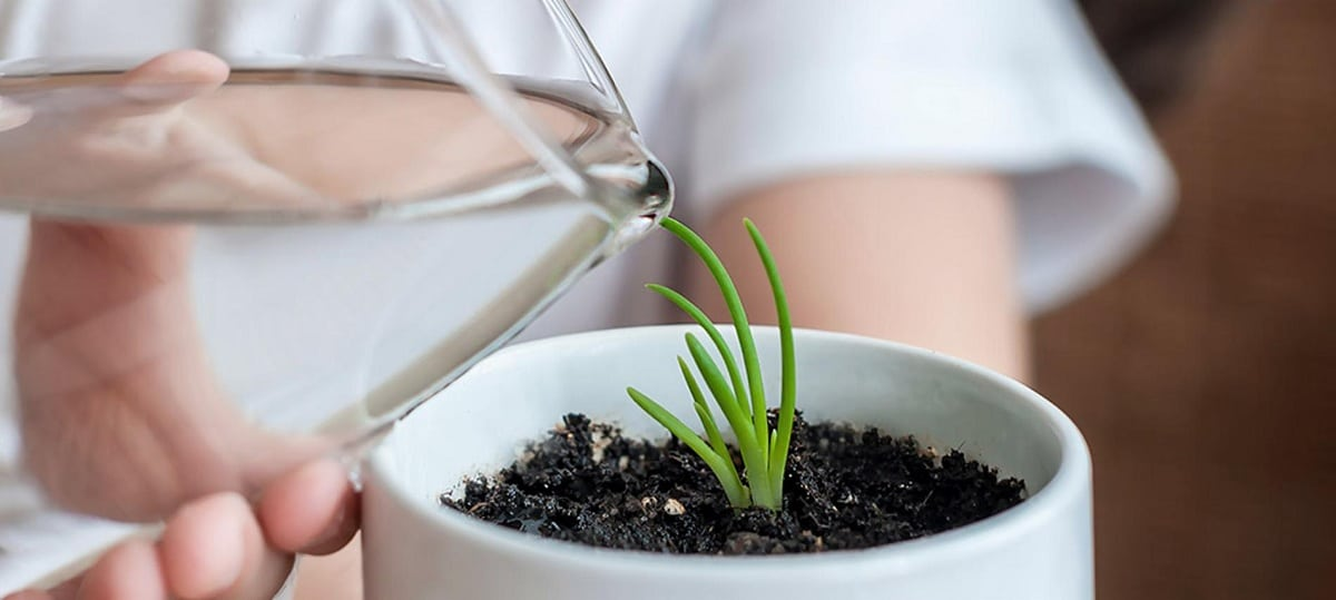 respuesta de estimulos de las plantas