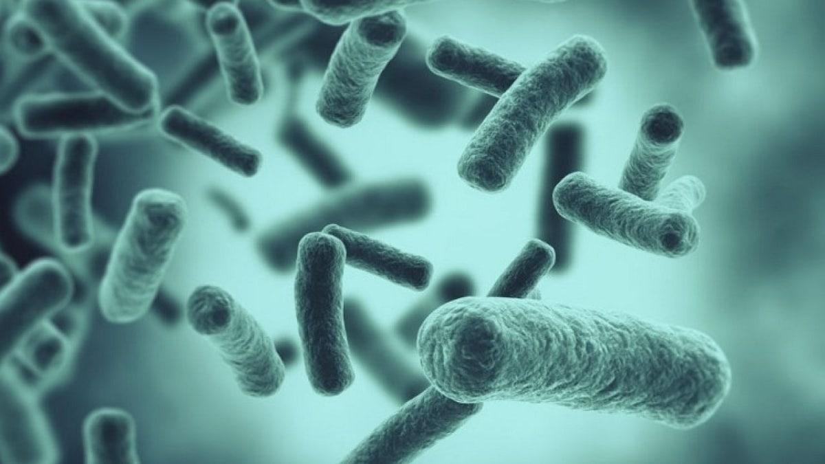 tipos de bacterias que existen