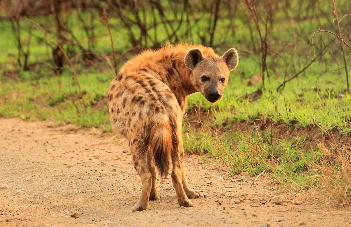 animales carnivoros en los ecosistemas