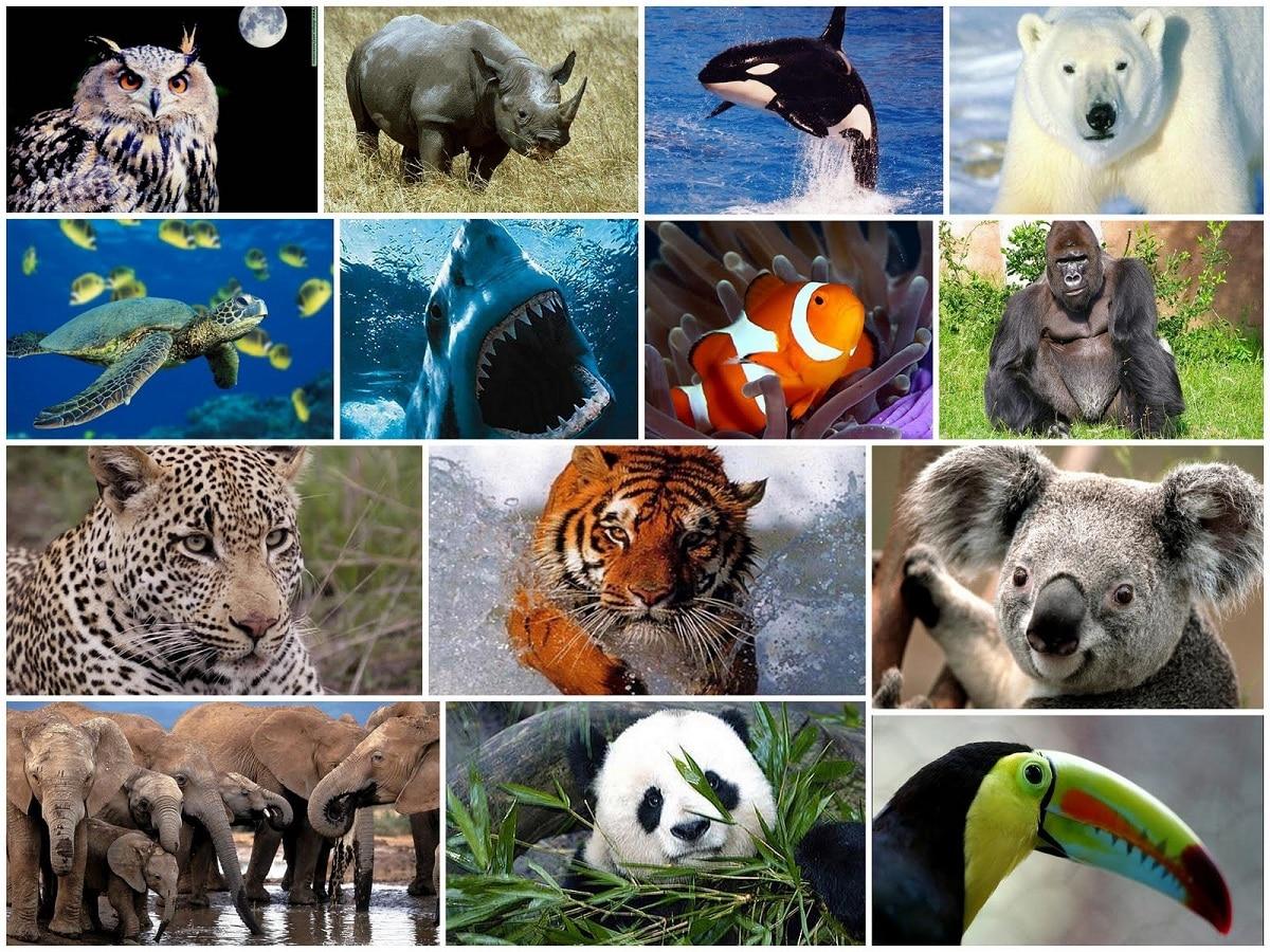 animales extintos que han desaparecido