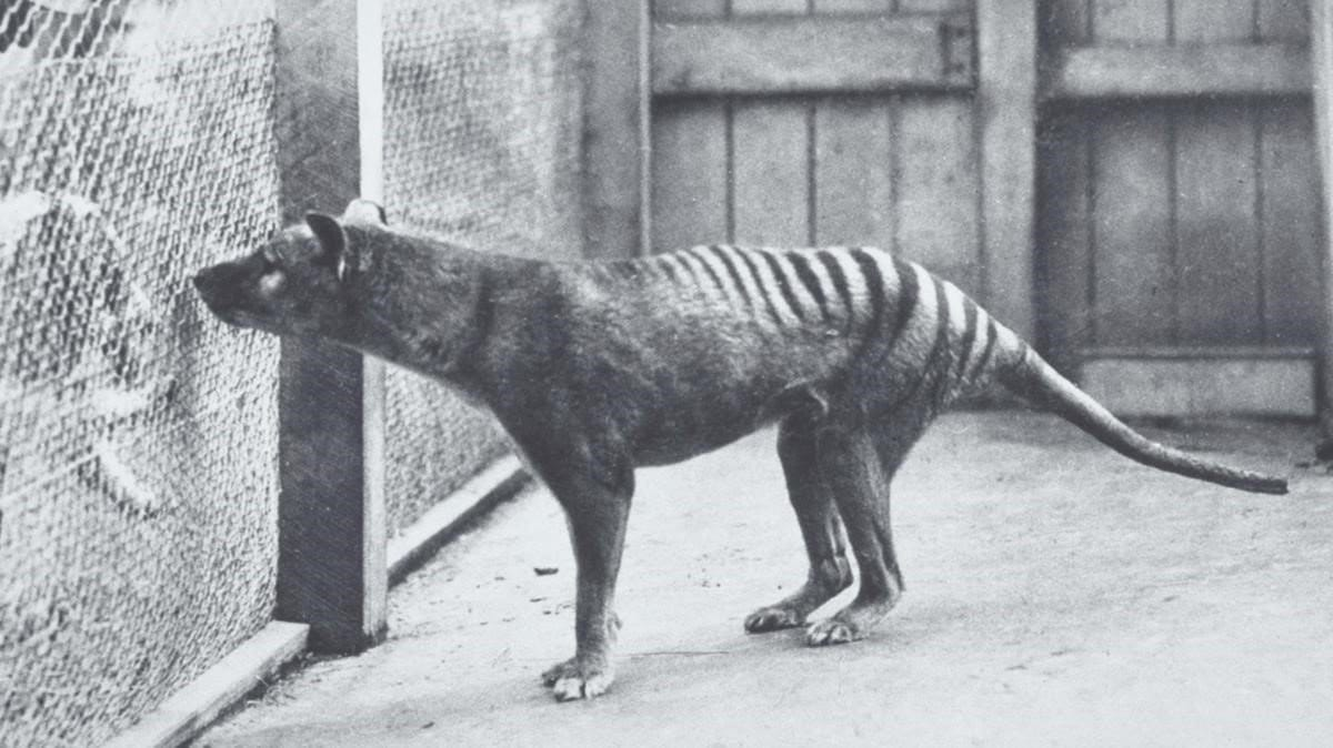 animales que ya no se pueden ver mas