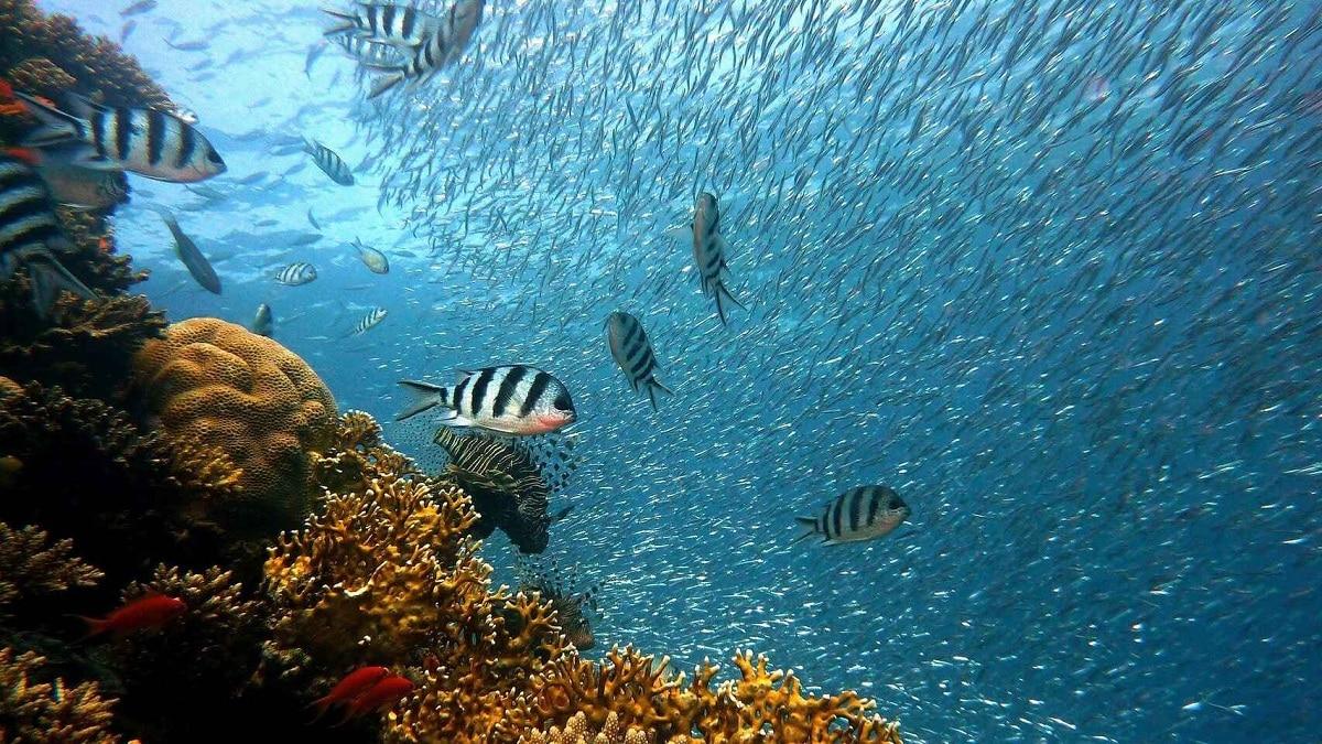 ecosistemas acuaticos de agua salada
