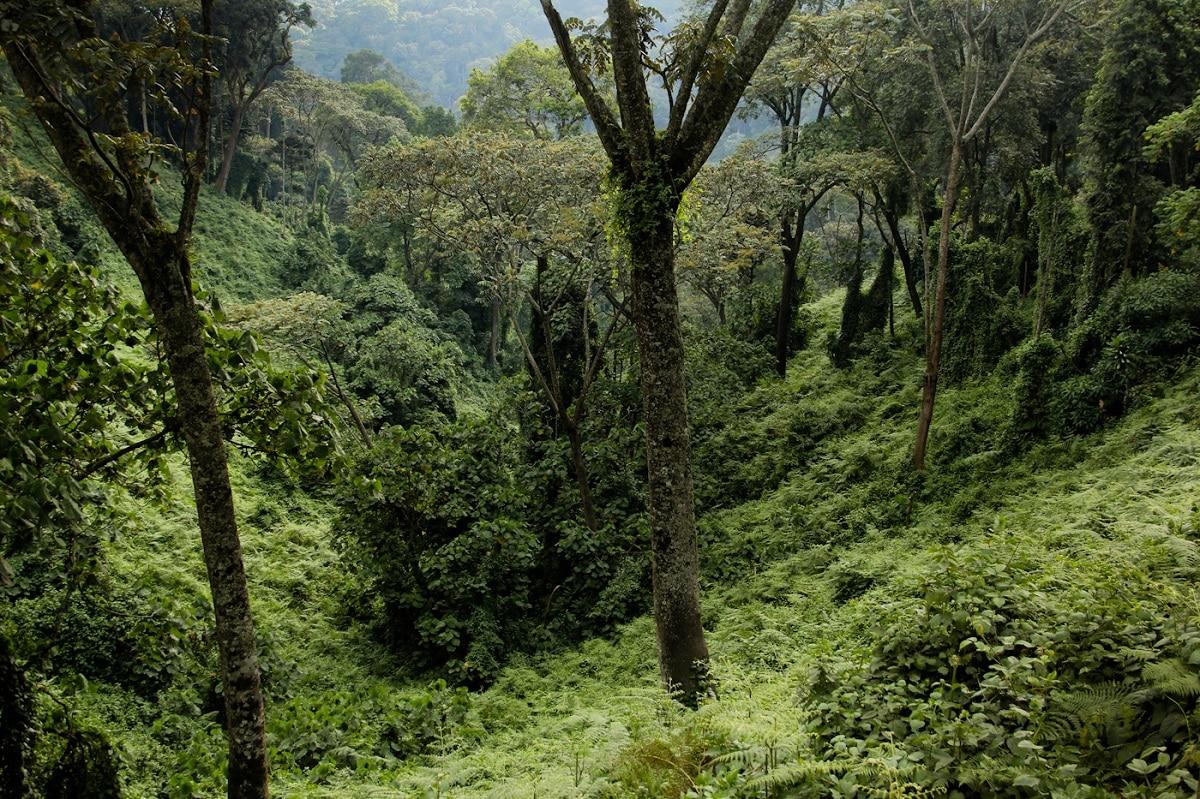 humedad de la selva