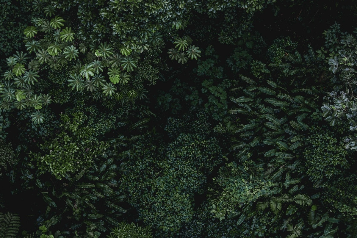 selva tropical abundante