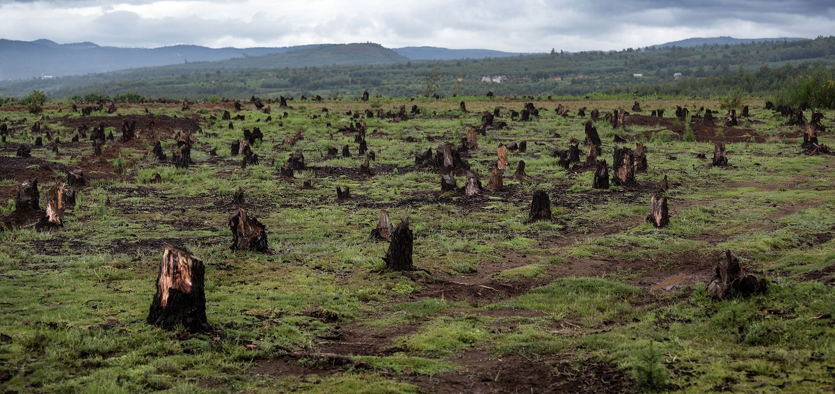 madera como ecosistema