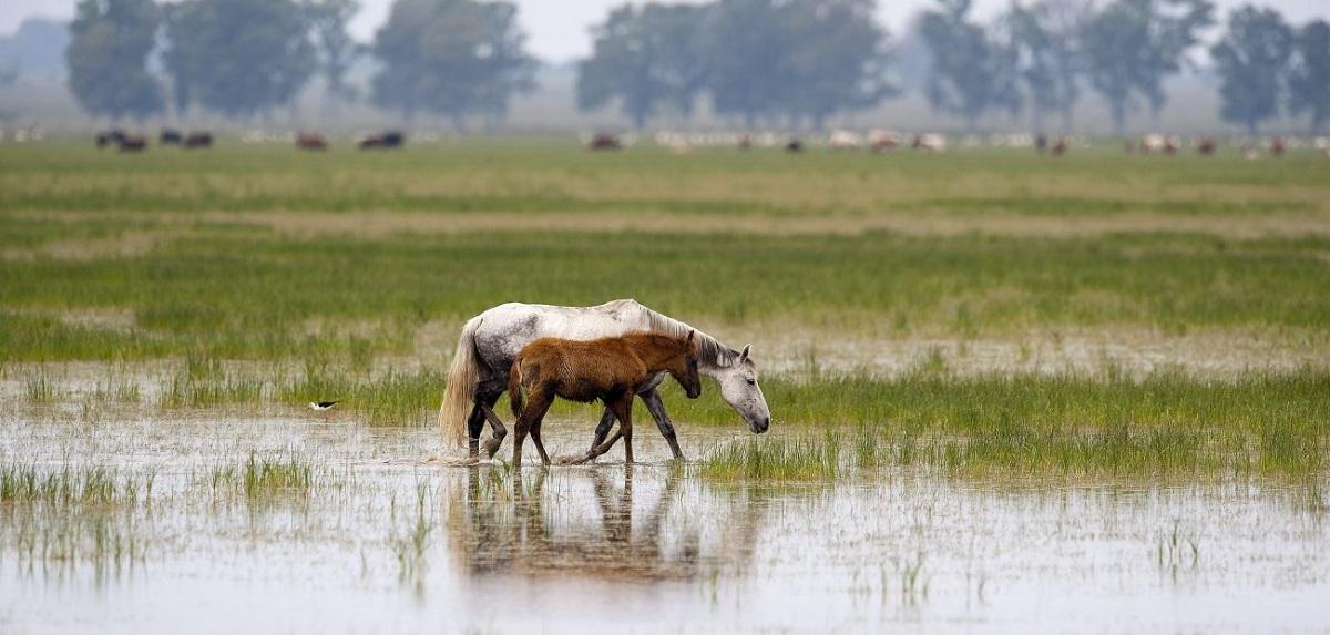 biodiversidad de los ecosistemas de doñana