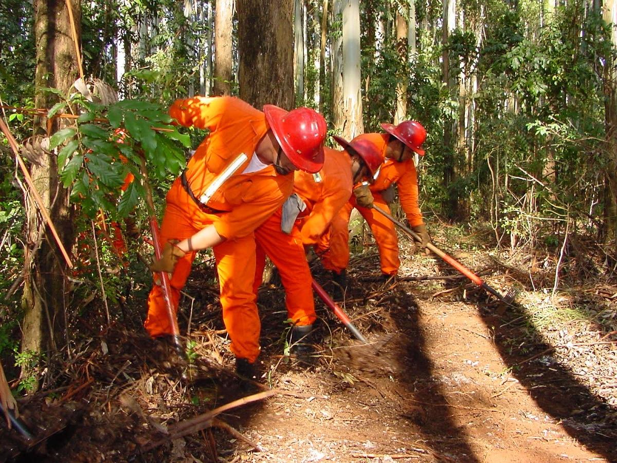 cuidado forestal