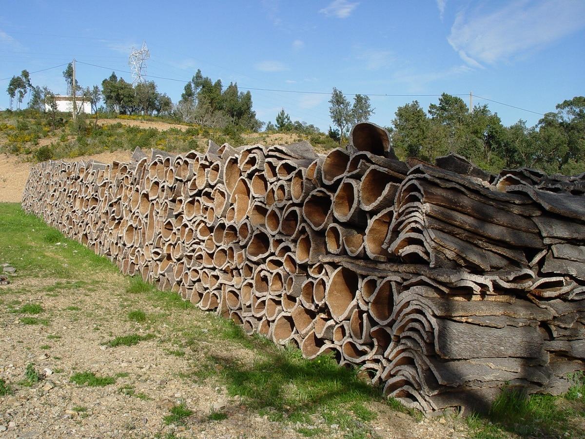 definicion de silvicultura