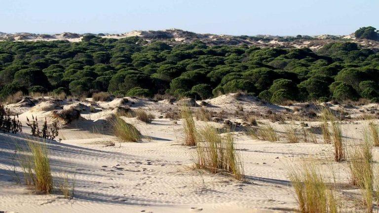 dunas con bosque
