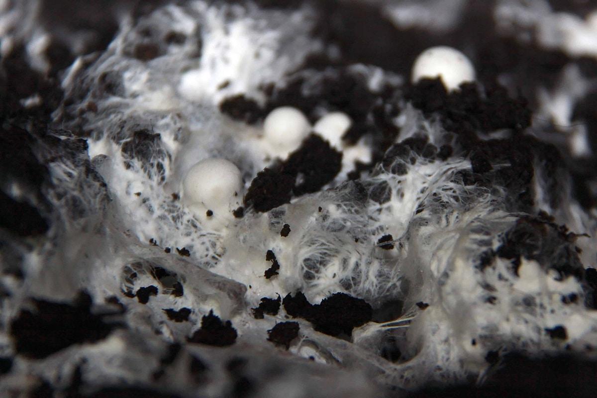hongos y bacterias