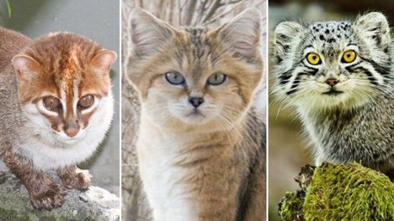 Animales felinos