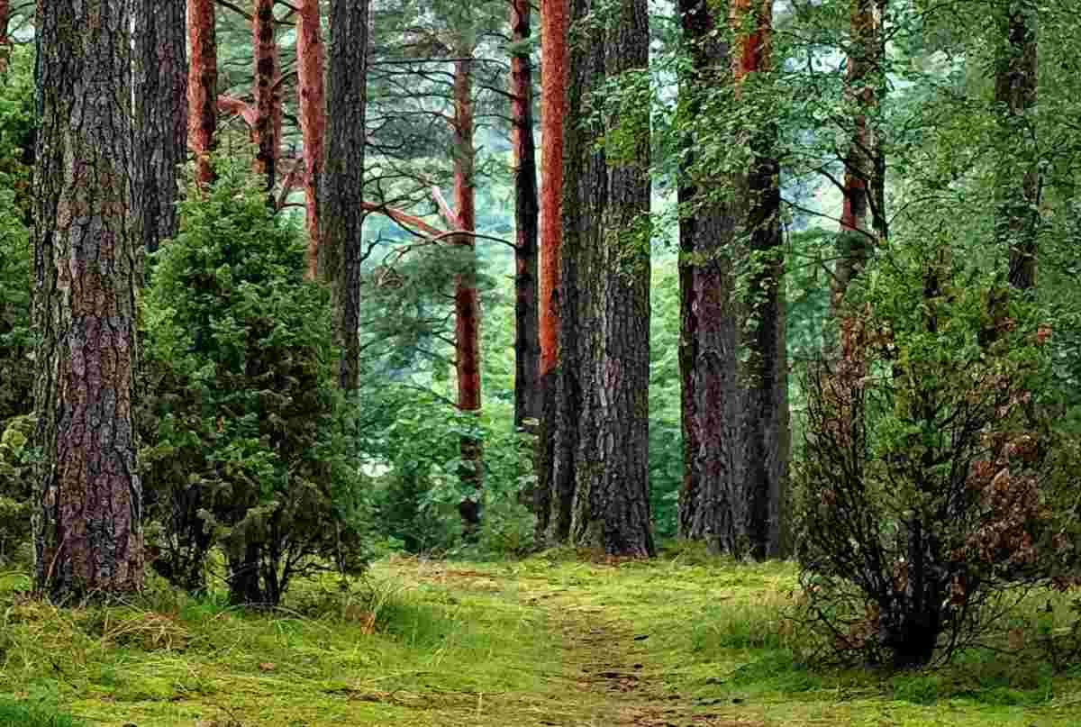 ecosistema terrestre y caracteristica