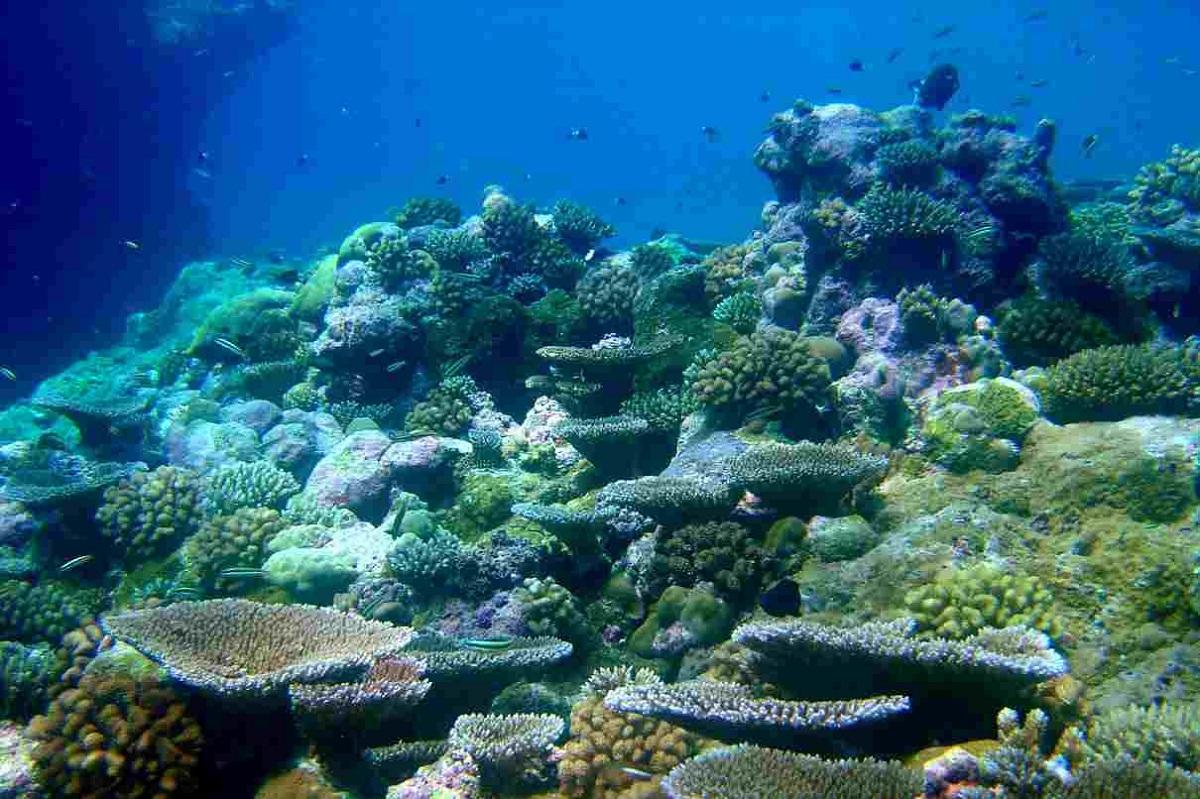 caracteristicas de los ecosistemas marinos